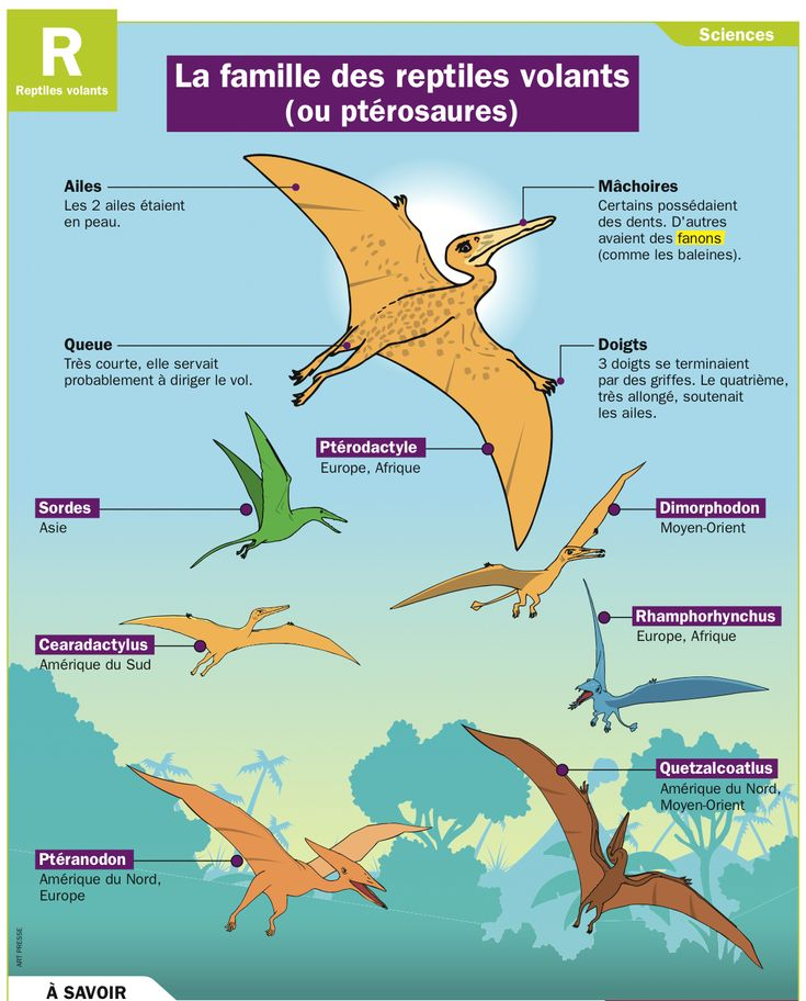 Fiche exposés : La famille des reptiles volants (ou ptérosaures)