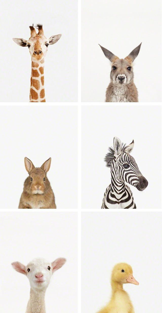 These would be so adorable for a nursery or kids room.  Love love love the simplicity of them.