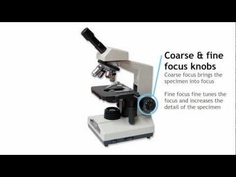 Penjelasan Lengkap Mengenai Mikroskop Cahaya