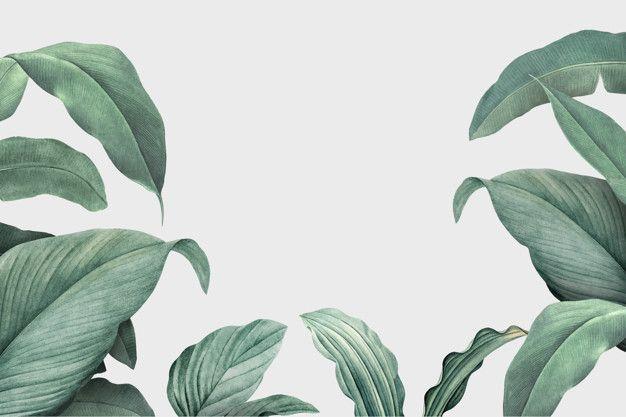 Foliage Background Download Free Vectors Background Download Foliage Free Vectors In 2020 Tropical Leaves Aesthetic Desktop Wallpaper Tropical Background