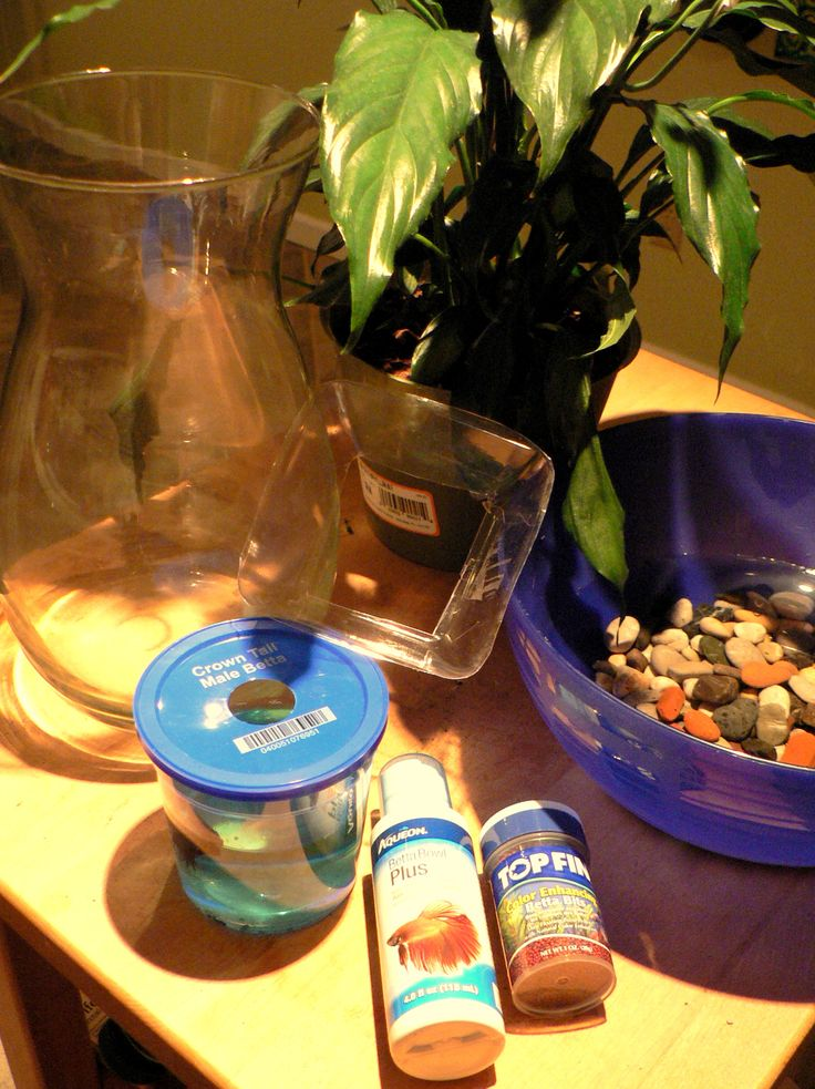 25 unique vase fish tank ideas on pinterest betta fish for Peace lily betta fish