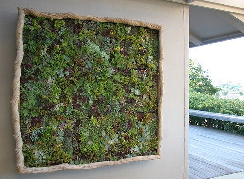Google Image Result For Http Floragrubb Florasblog Wp Vertical Succulent Gardensdiy