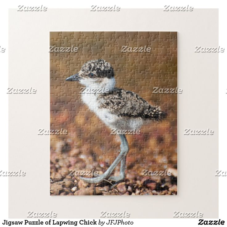 Jigsaw Puzzle of Lapwing Chick