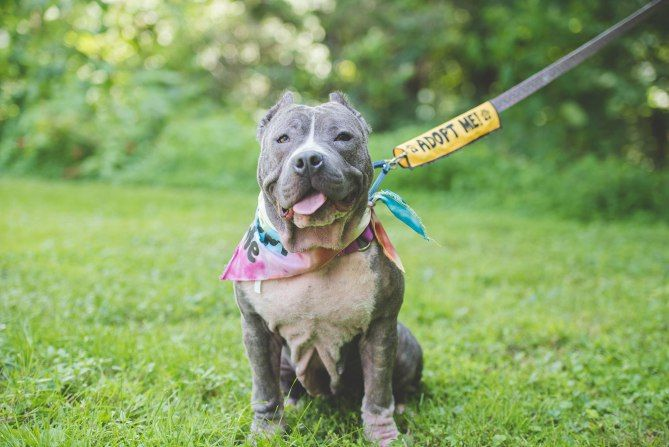 BG Productions featured on People.com 10 Myths About Pit Bulls Debunked || Authors of The Pit Bull Life prove that the negative rumors you hear about pit bulls just aren't true || new book by Deirdre Franklin and Linda Lombardi //  Negative Stereotypes and Myth About Pit Bull Dogs