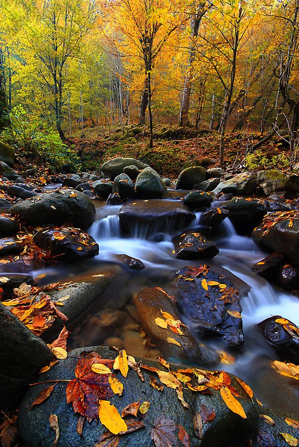 what is more beautiful the babbling brook or the autumn