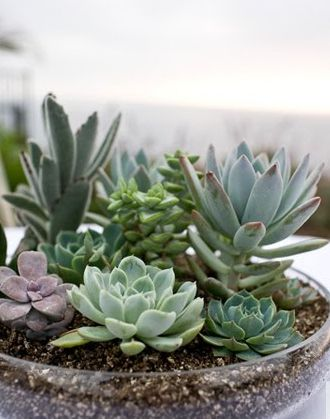 centro de mesa flores suculentas