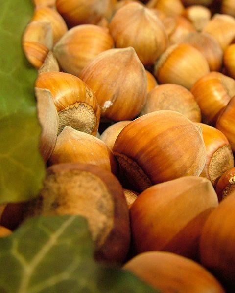 Olio di Nocciola - Corylus avellana  L'olio di #nocciola è un ottimo olio vettore estratto da nocciole arrostite e pressato a freddo. Quest'olio è solitamente di un chiaro giallo e, quando mescolato con un olio essenziale crea un aroma avvolgente.  Ricco di sostanze nutritive, quest'olio viene utilizzato nell'aromaterapia per nutrire la pelle grazie alle vitamine che contiene e può inoltre essere aggiunto a creme e lozioni per tutti tipi di pelle.  Solo per uso esterno.