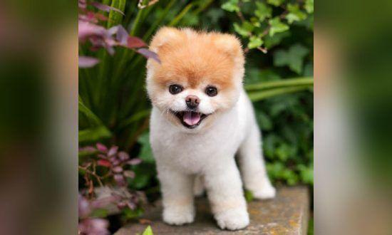 The cutest dog in thew world ift.tt/2MUAY3H