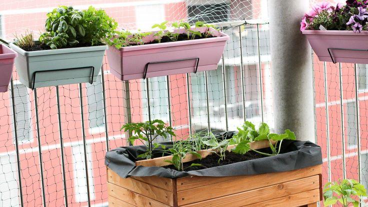 Mon potager de balcon en carré