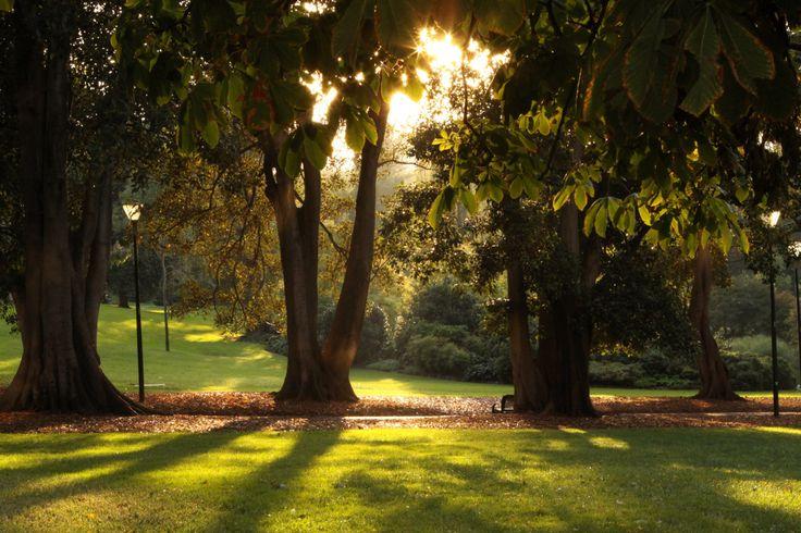Treasury Gardens, Victoria Australia