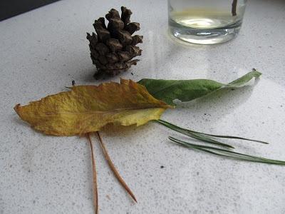 Wczesna Edukacja Antka i Kuby : Światowy Dzień Drzewa / World Tree Day