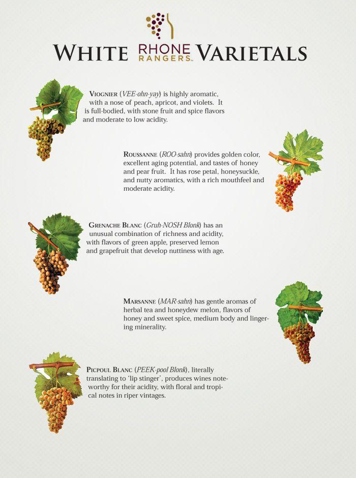 Rhone White Varietals  wine / vinho / vino mxm