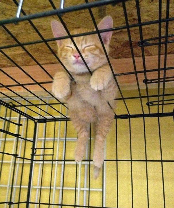 55 fun evidence that cats can sleep anywhere