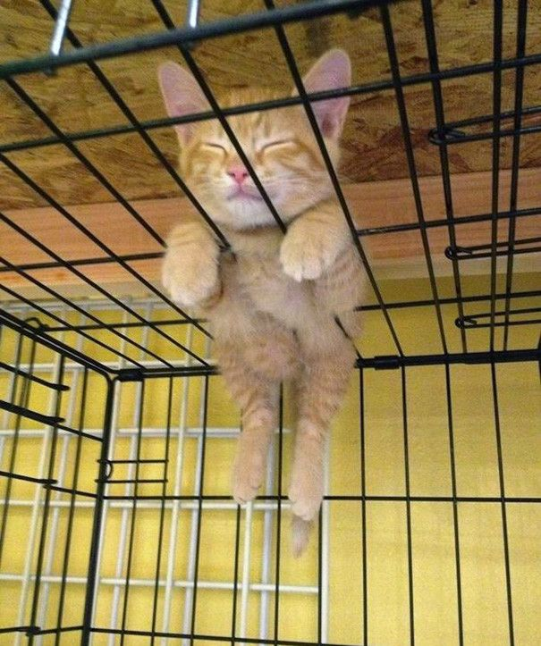 55 fun evidence that cats can sleep anywhere