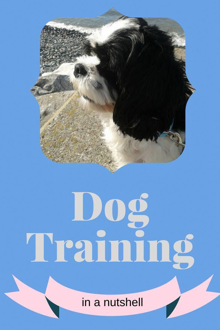 Check The Webpage To Read More On Dog Training Make Sure That You