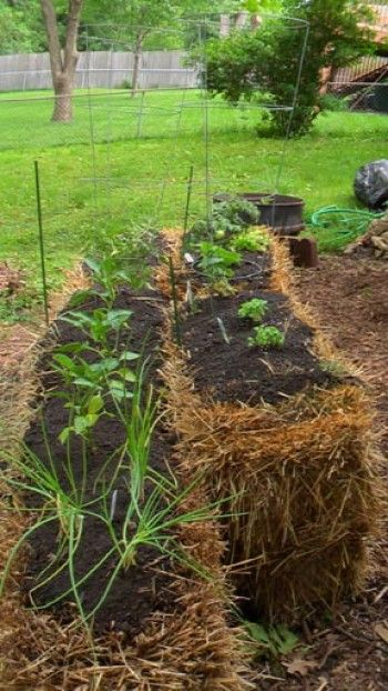 67 best Straw Bale gardening images on Pinterest | Hay bales, Straw ...