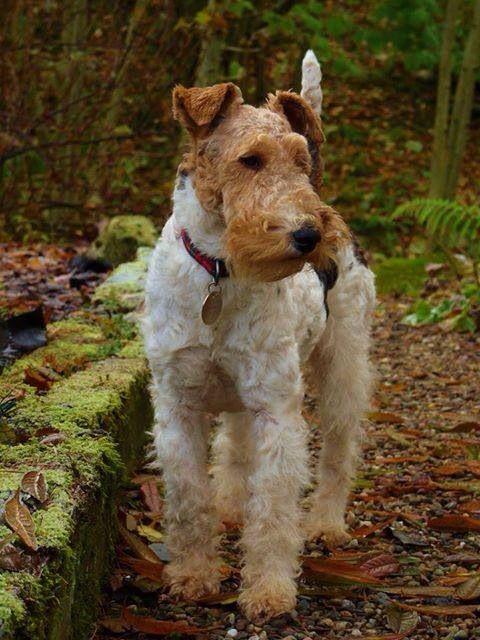Mollie Mae by Ann McCartney taken in October 2013 in Perthshire