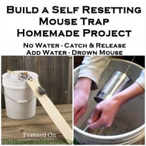 Build a Self Resetting Mouse Trap Homemade Project - Homesteading pest control - The Homestead Survival