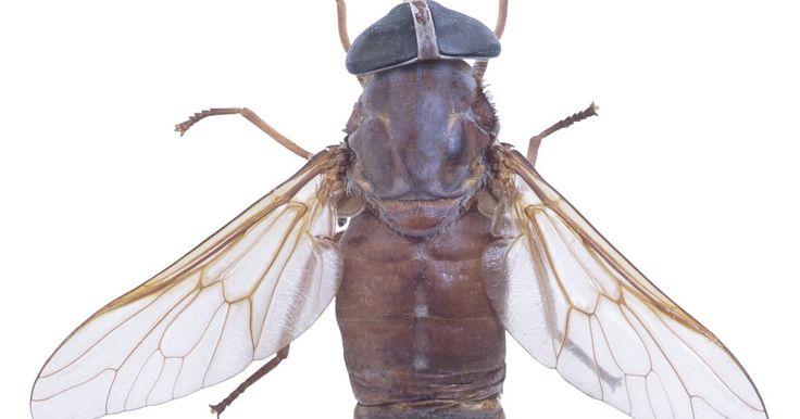 As 25 melhores ideias de como eliminar moscas no pinterest - Como sacar las moscas de la casa ...