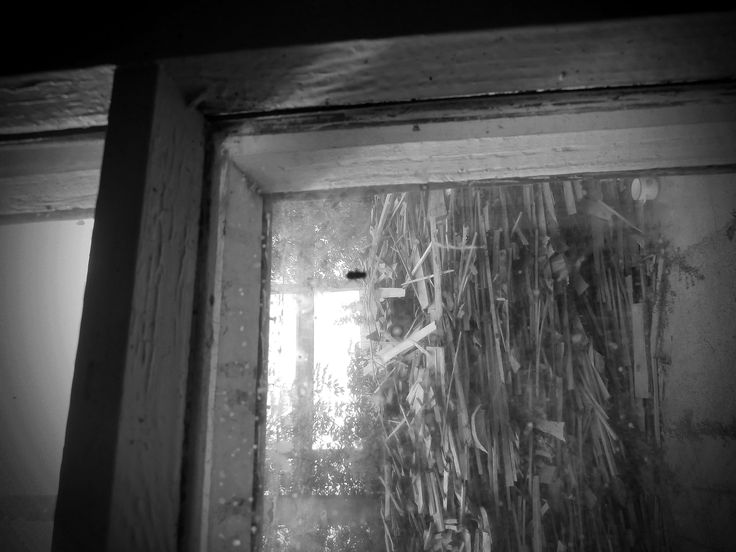 Wood rain - null