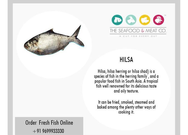 25 best fresh fish online images on pinterest fresh meat for Oily fish representative species