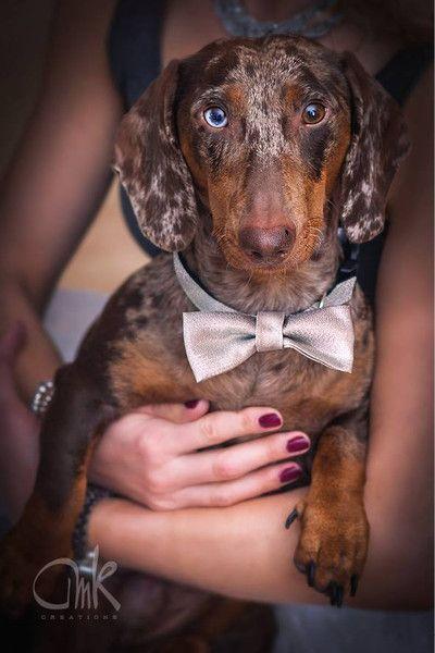 Hund: Halsbänder - Hundehalsband mit Fliege - S - ein Designerstück von madefordogs bei DaWanda Foto: https://www.amk-creations.de/