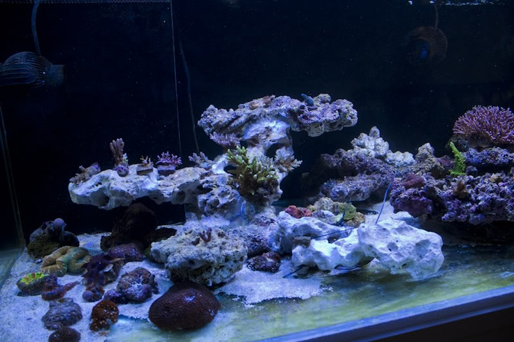 great rock scape | Reef Aquarium | Pinterest | Rocks