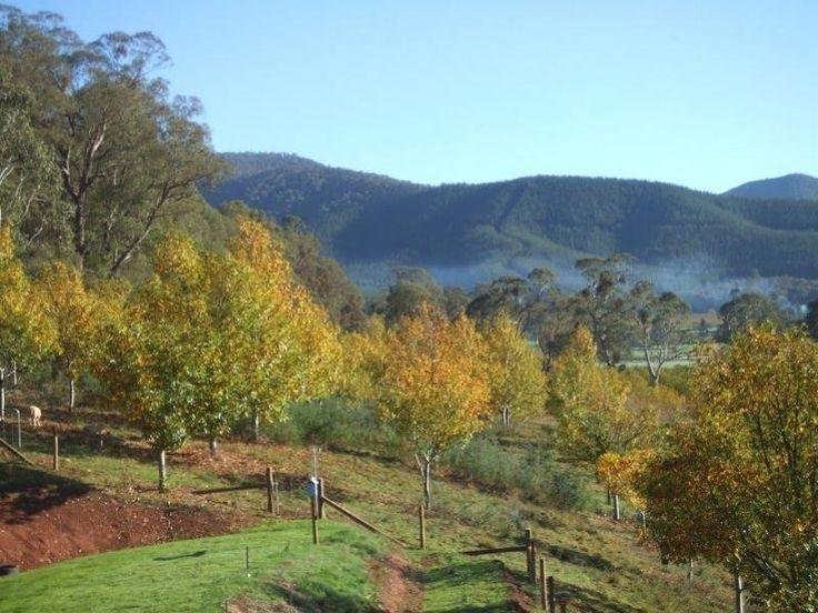 Acreage/Semi-Rural: 3 bedrooms, 1 bathrooms for sale. Contact: Gerard Gray re: 1140 Morses Creek Rd, Wandiligong