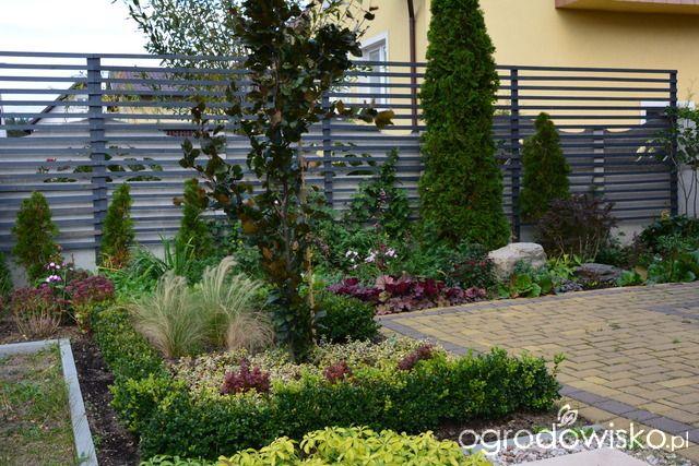 Ogródek Iwony II - strona 413 - Forum ogrodnicze - Ogrodowisko