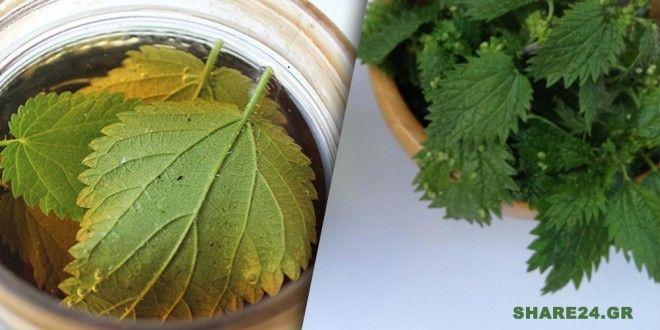 Αυτό το Βότανο Σταματά την Τριχόπτωση & Ρυθμίζει τις Ορμόνες Σας
