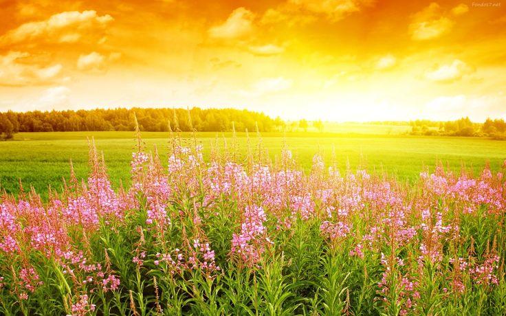 Imágenes De Paisajes con Flores - Fondo En Alta Definición para Descargar 5 HD Wallpapers