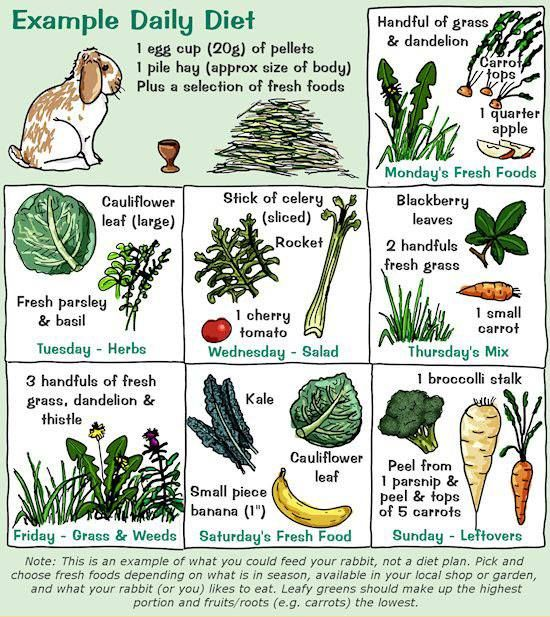 Best daily diet for rabbits.