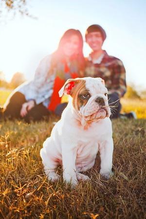 Our 12 week old English Bulldog, Babu.