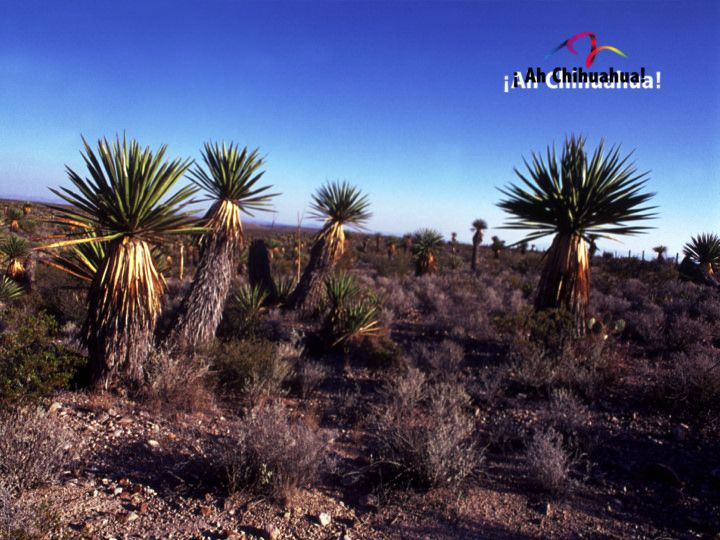 TURISMO EN CHIHUAHUA ¿Cómo es el clima en Chihuahua? El clima en Chihuahua es tan variado como su paisaje, en pocas zonas de la Republica se ve tan marcado el cambio de las estaciones. Un invierno crudo como nevadas esporádicas que brindan paisajes insólitos en México. El verano suele ser cálido hasta llegar a extremos de 40º centígrados en lugares como Ojinaga y Ciudad Juárez. www.turismoenchihuahua.com