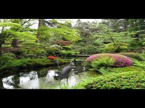 Amazing bonsai trees and flor de jad