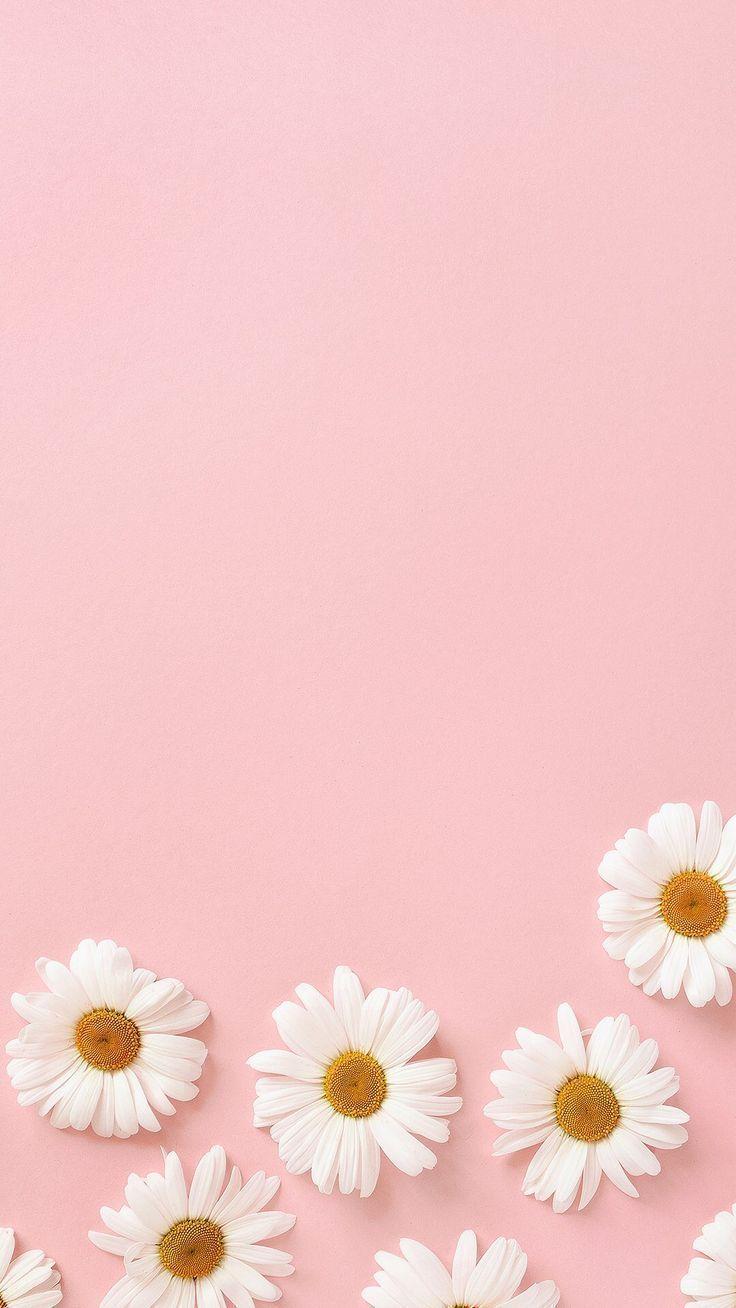 Wallpaper Iphone Poster Bunga Bunga Daisy