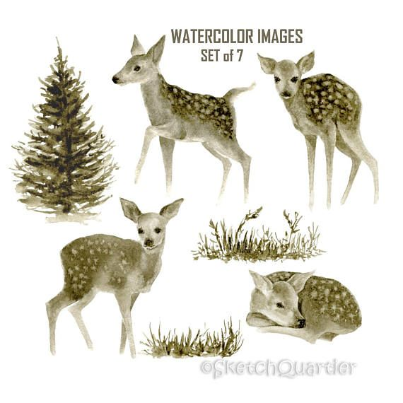 Watercolour Fawns Set of 7 images / Digital clipart on