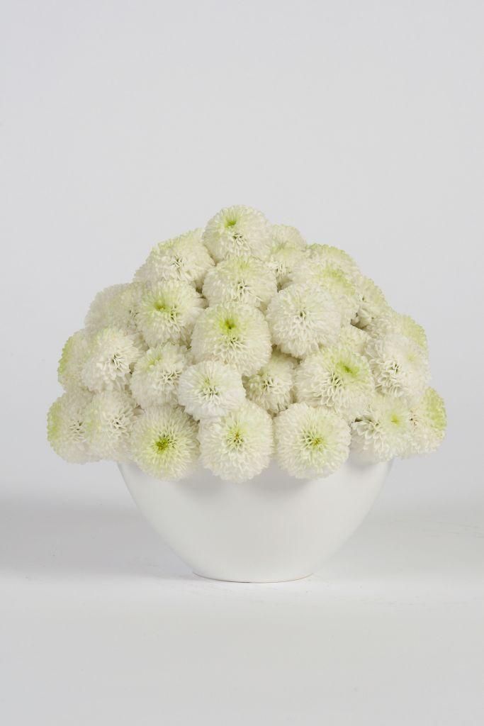 This scrumptious arrangement of white Dahlia looks good enough to eat!