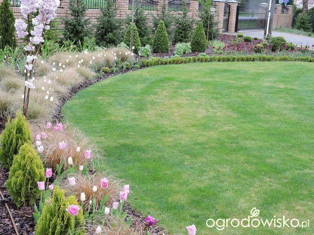 Zielonej ogrodniczki marzenie o zielonym ogrodzie - strona 657 - Forum ogrodnicze - Ogrodowisko