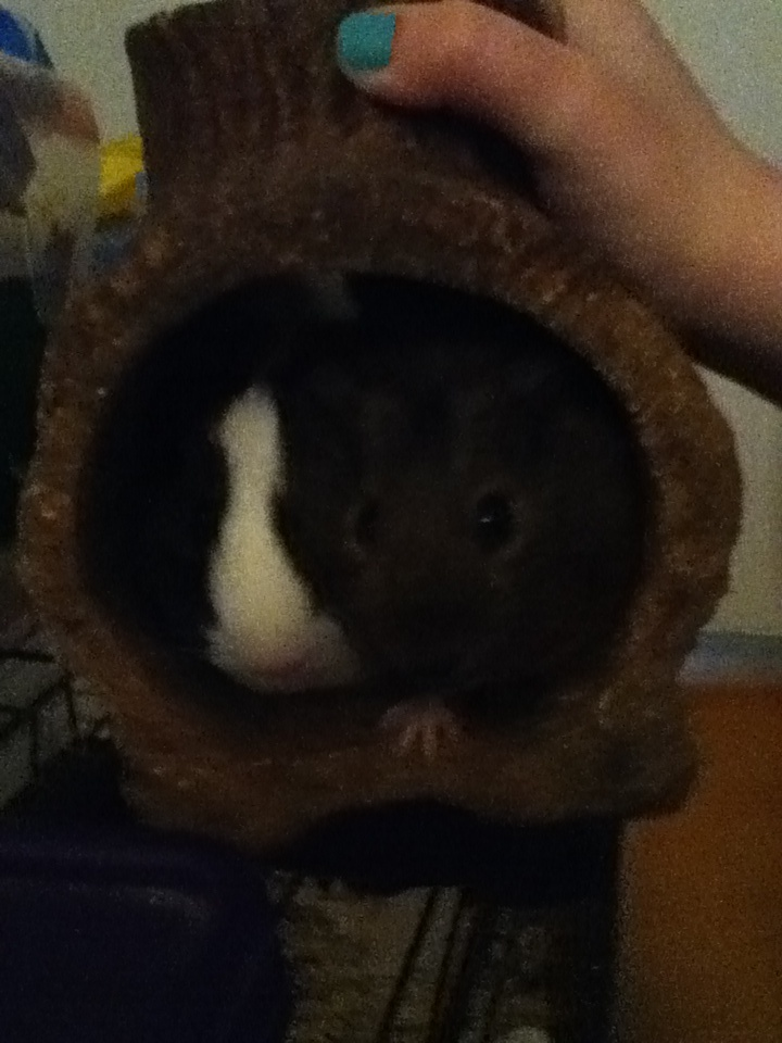 Eleanor and Sandy swished together in their tunnel log.