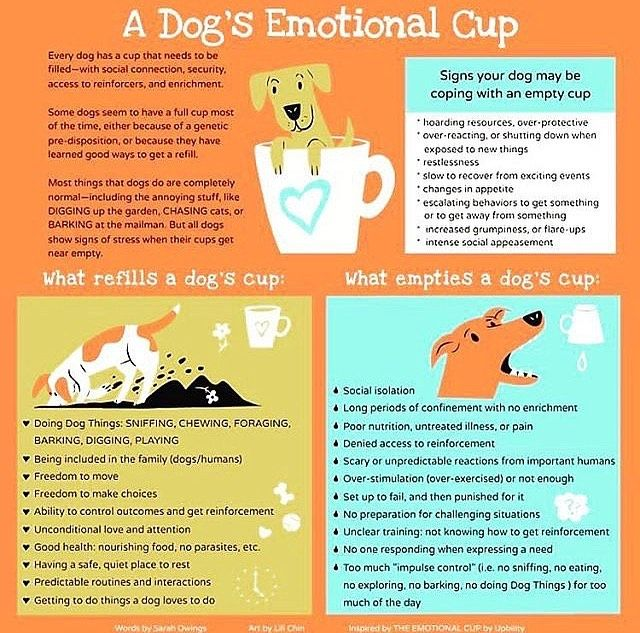 This Is So Good Dog Emotions Good Doggies Online Your Dog