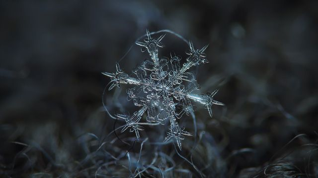 Snowflake ultra HD wallpaper: Starlight