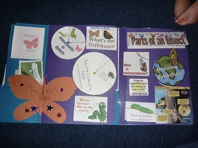 Butterfly & Insect Lapbook