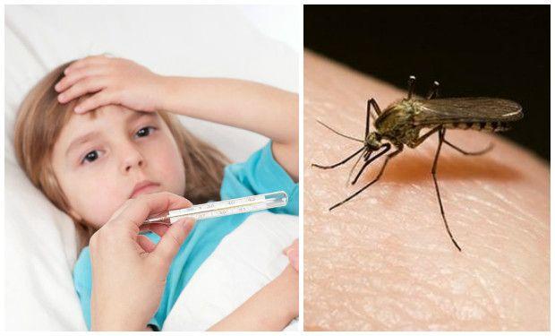 enfermedad del dengue sintomas