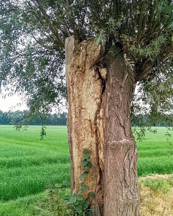 Tussen Roosendaal en Wouw staat deze schitterende opengewerkte (..) boom. #wandelen #fotografie #willemlaros.nl