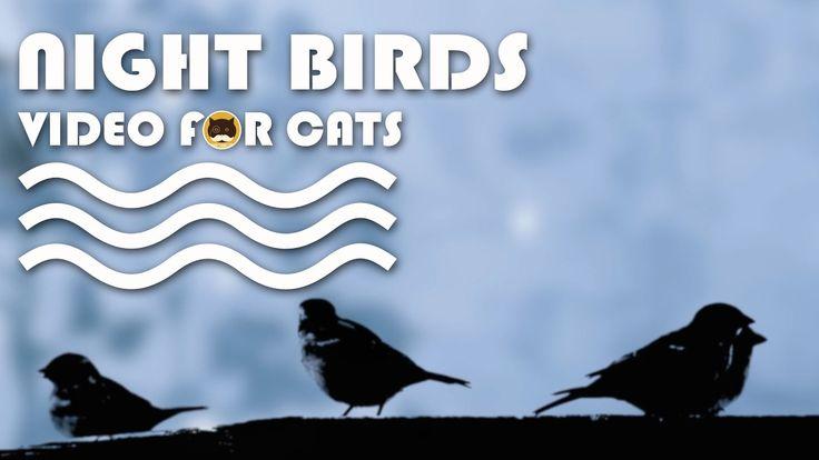 CAT TV - Night Birds. Bird Video for Cats to Watch. More Videos for Cats: www.tvbini.com  #catTV #TVforcats #tvbini #movieforcats #entertainmentforcats #catgames #videoforcats #cats #pets #videosforcats #catentertainment