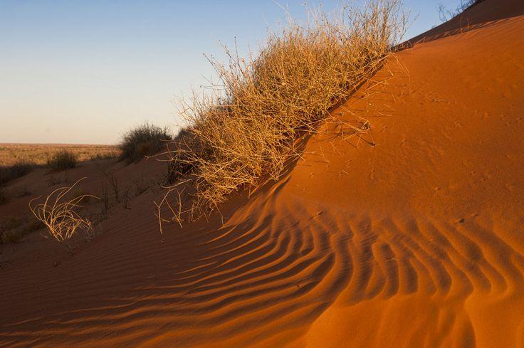https://flic.kr/p/t1ijvu | Simpson Desert | Simpson Desert central Australia