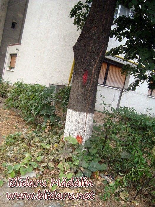 copac marcat focsani