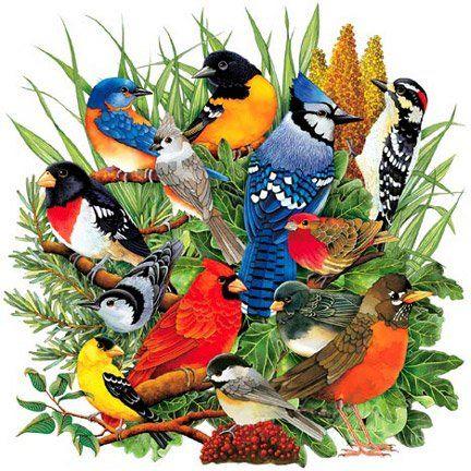 Bird Sounds - Over one hundred bird audio recordings of North American birds!