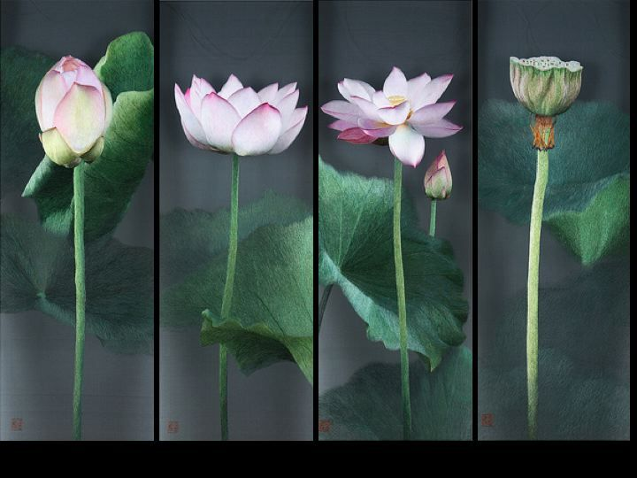 The 217 best lotus images on pinterest chinese painting japanese ode to the lotus mightylinksfo